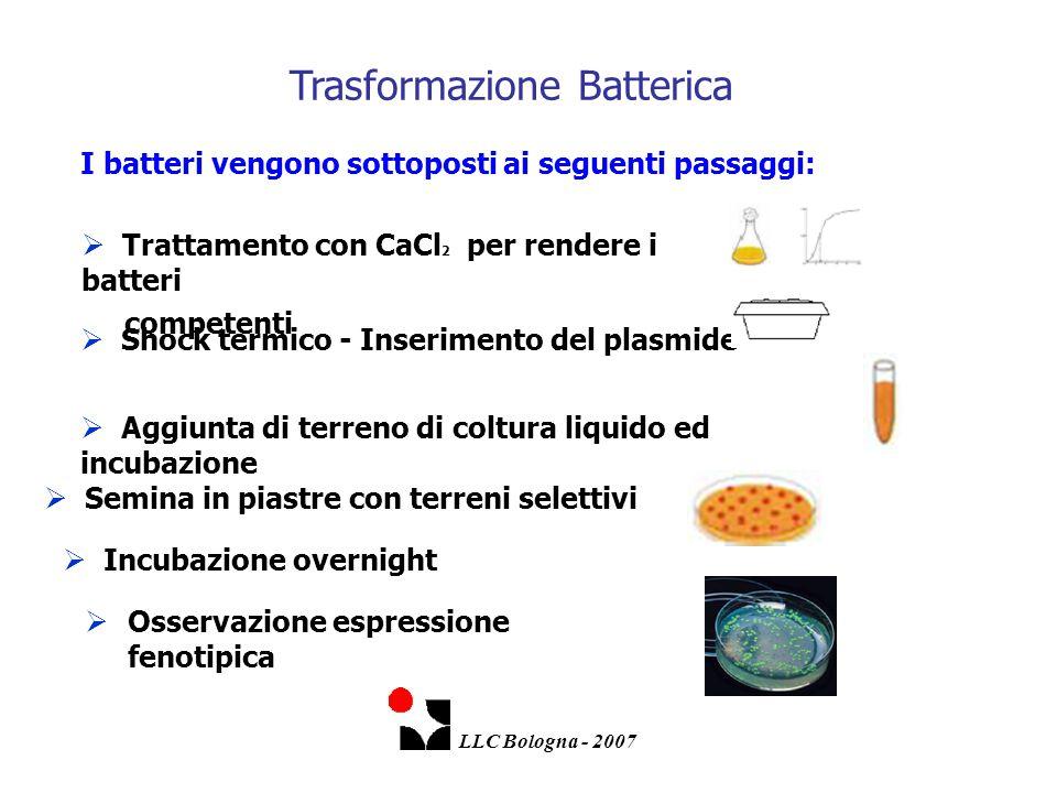 Trasformazione Batterica
