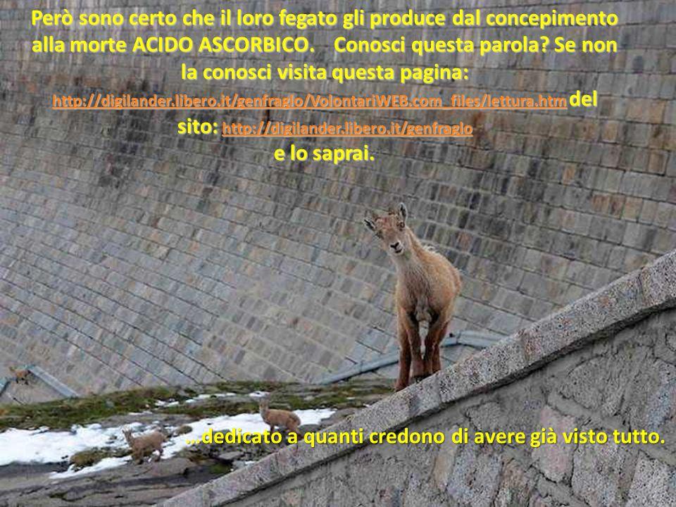 Però sono certo che il loro fegato gli produce dal concepimento alla morte ACIDO ASCORBICO. Conosci questa parola Se non la conosci visita questa pagina: http://digilander.libero.it/genfraglo/VolontariWEB.com_files/lettura.htm del sito: http://digilander.libero.it/genfraglo