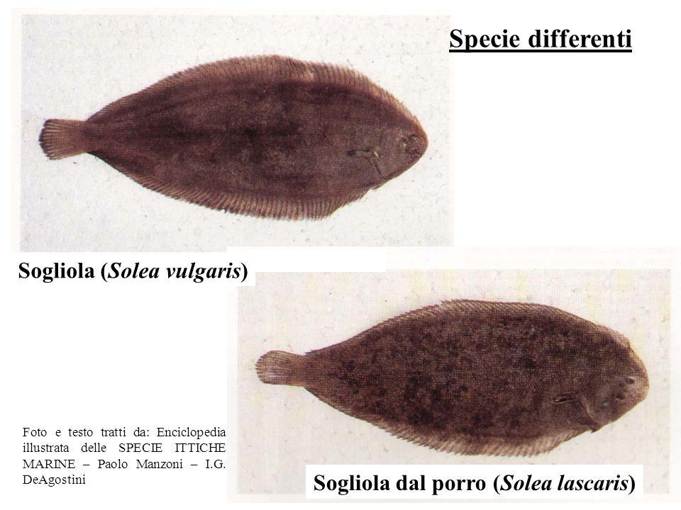 Sogliola (Solea vulgaris) Sogliola dal porro (Solea lascaris)
