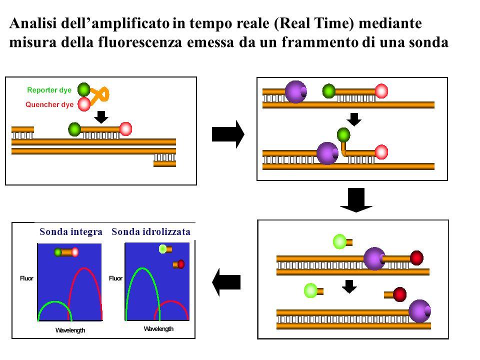 Analisi dell'amplificato in tempo reale (Real Time) mediante misura della fluorescenza emessa da un frammento di una sonda