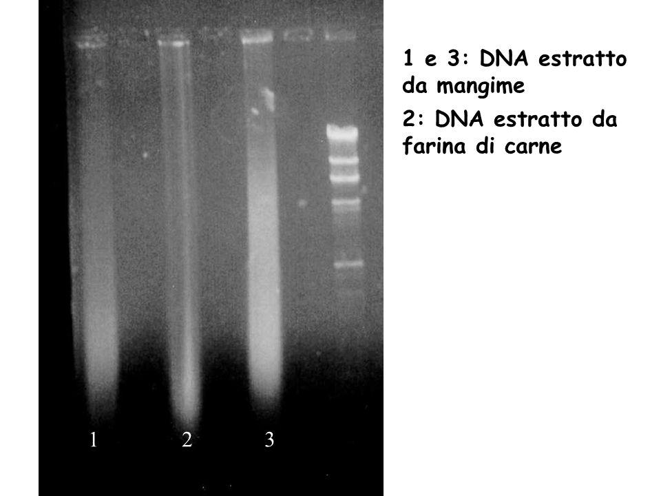 1 e 3: DNA estratto da mangime
