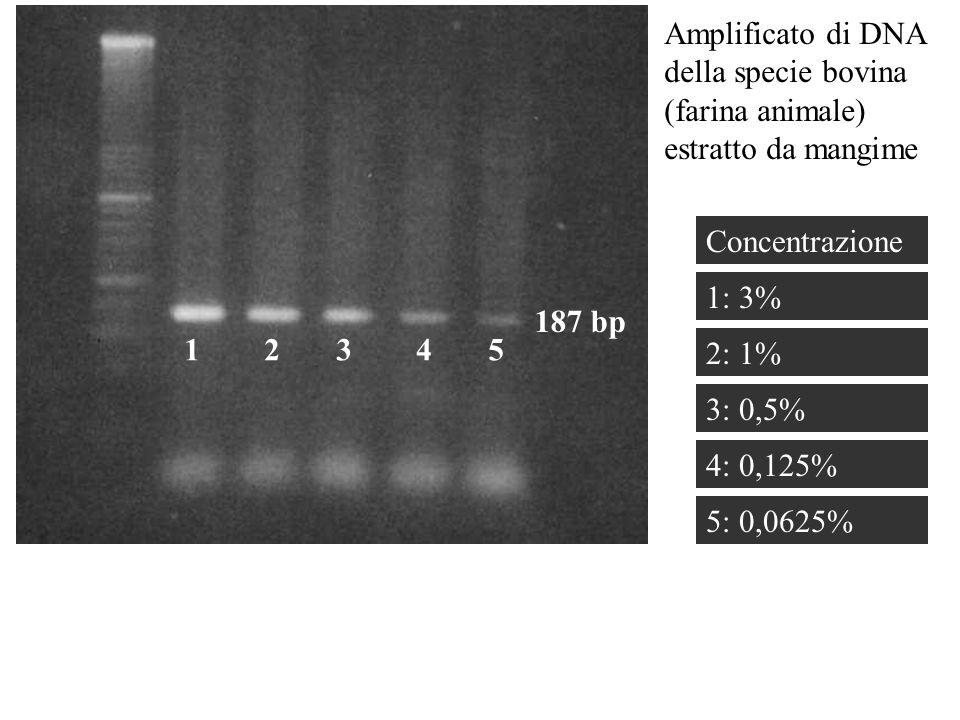 Amplificato di DNA della specie bovina (farina animale) estratto da mangime