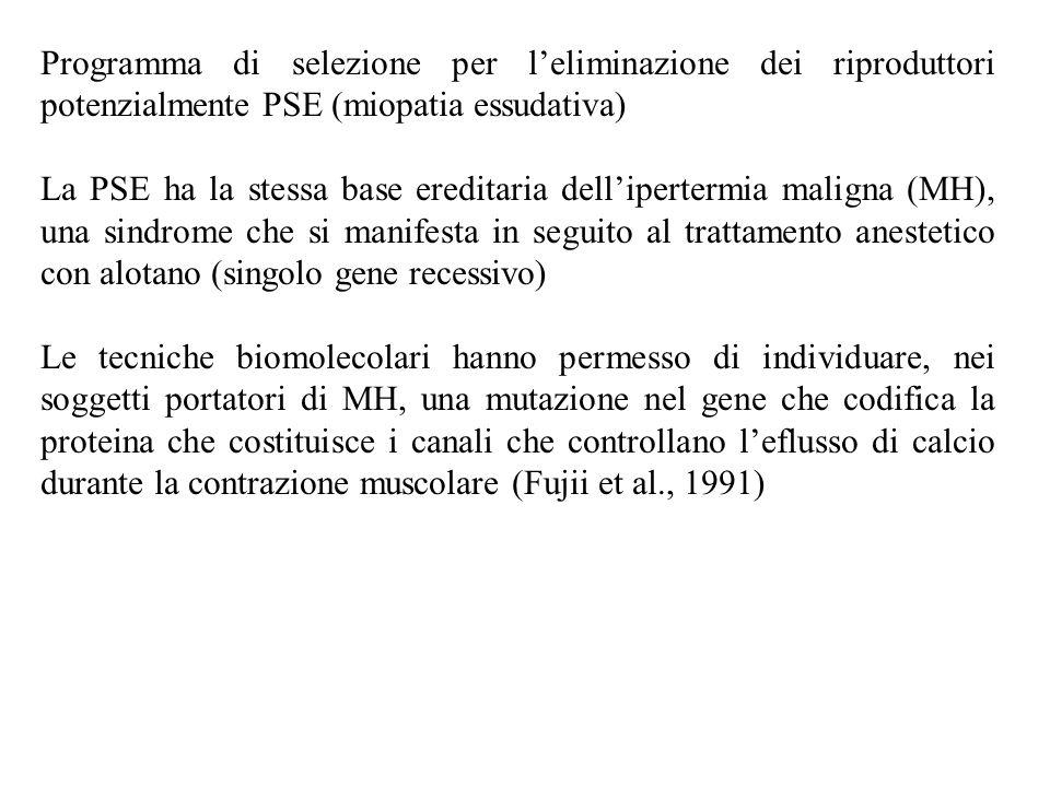 Programma di selezione per l'eliminazione dei riproduttori potenzialmente PSE (miopatia essudativa)