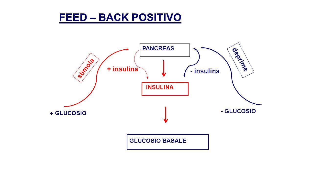 FEED – BACK POSITIVO deprime stimola + insulina - insulina PANCREAS