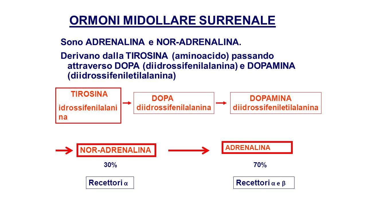 ORMONI MIDOLLARE SURRENALE