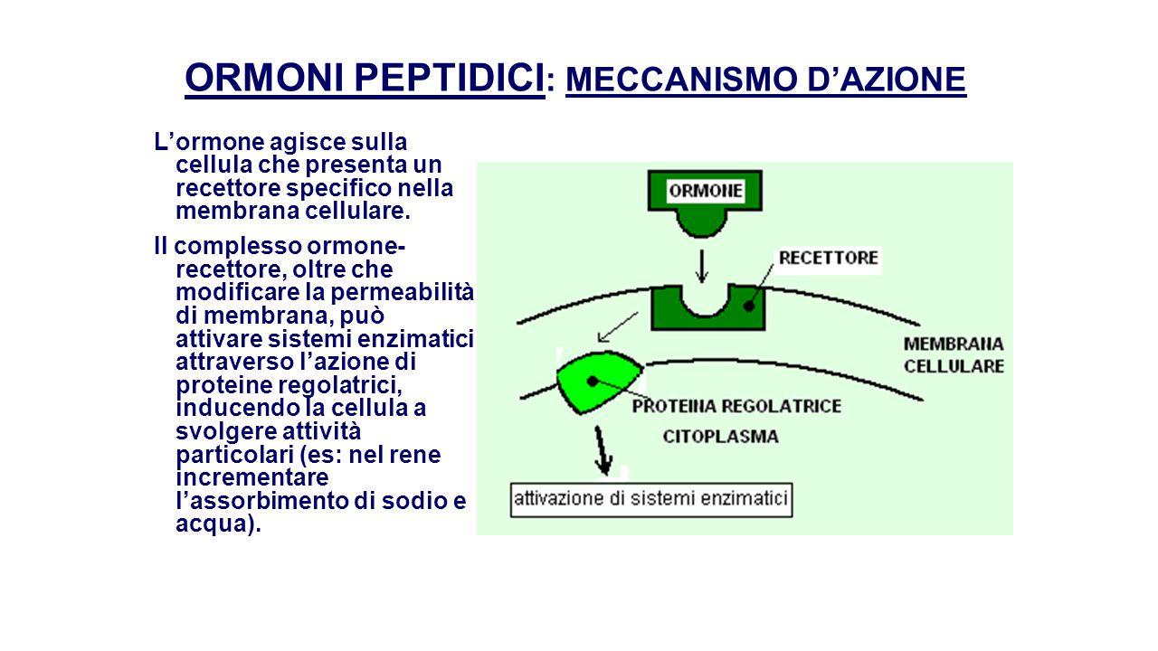 ORMONI PEPTIDICI: MECCANISMO D'AZIONE