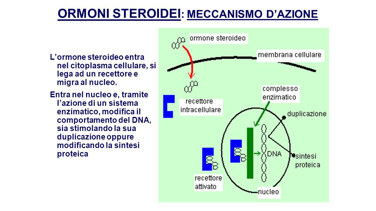 ORMONI STEROIDEI: MECCANISMO D'AZIONE