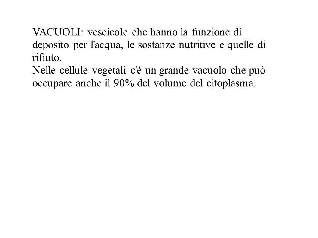 VACUOLI: vescicole che hanno la funzione di deposito per l acqua, le sostanze nutritive e quelle di rifiuto.