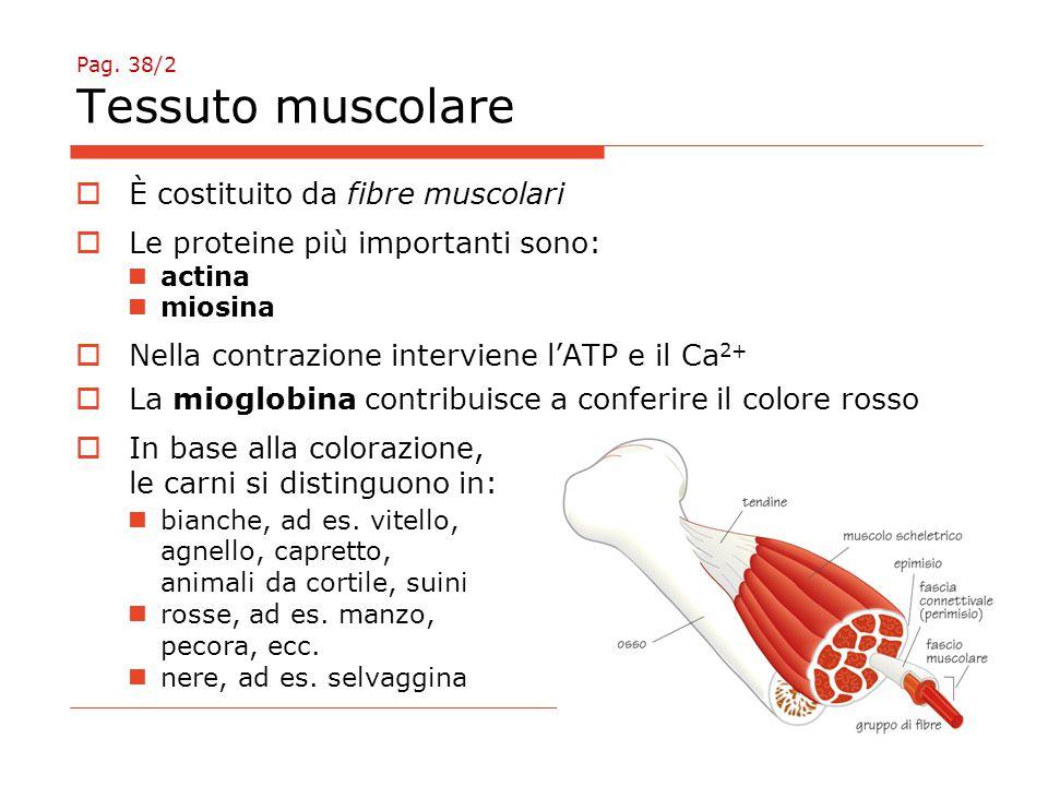 Pag. 38/2 Tessuto muscolare