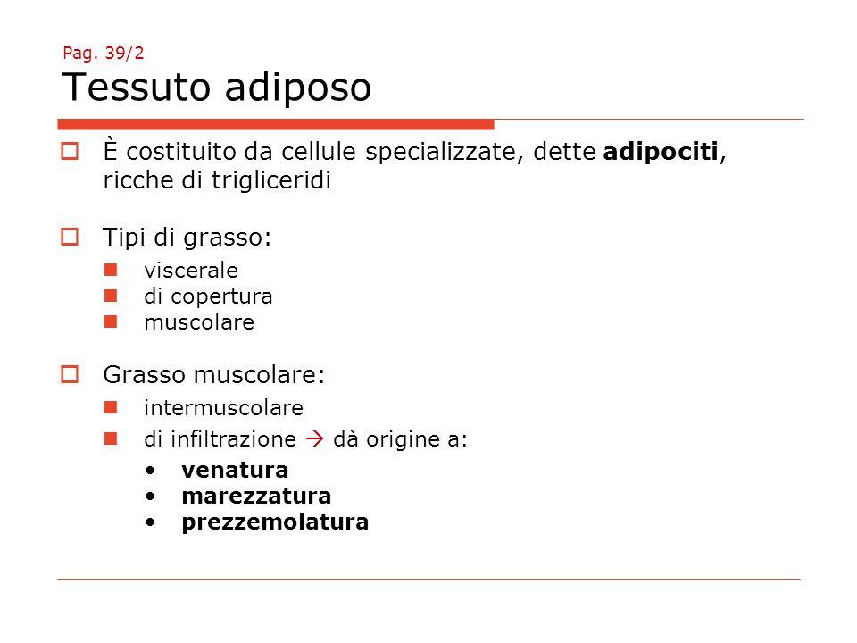 Pag. 39/2 Tessuto adiposo È costituito da cellule specializzate, dette adipociti, ricche di trigliceridi.