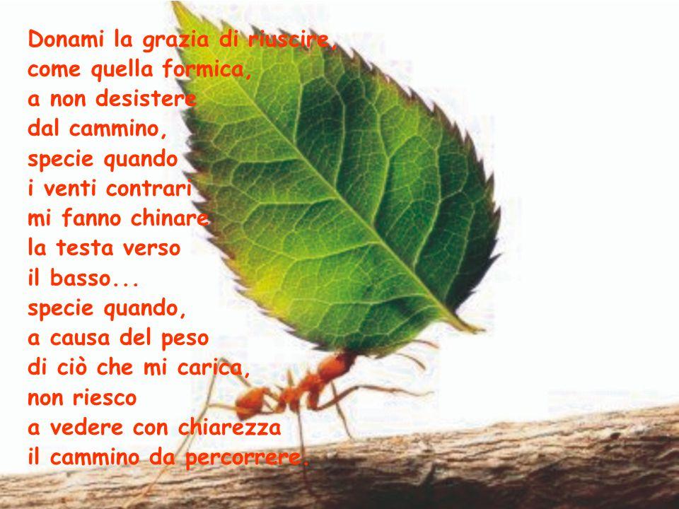 Donami la grazia di riuscire, come quella formica, a non desistere dal cammino, specie quando i venti contrari mi fanno chinare la testa verso il basso...