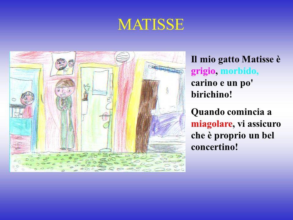 MATISSE Il mio gatto Matisse è grigio, morbido, carino e un po birichino!