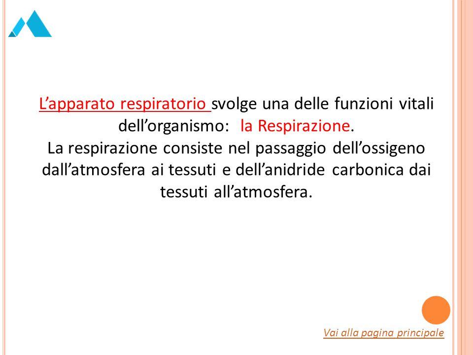 L'apparato respiratorio svolge una delle funzioni vitali dell'organismo: la Respirazione.