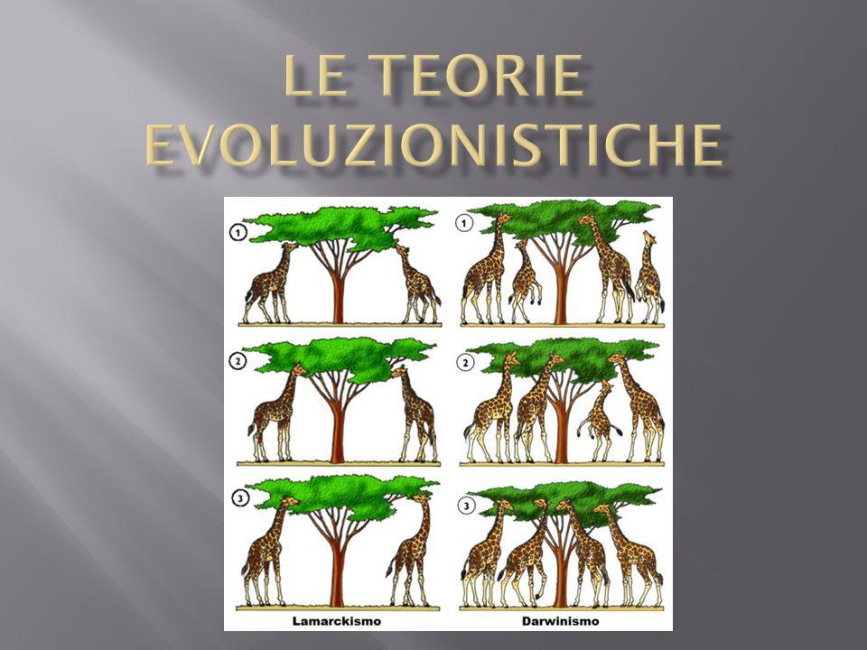 Le teorie evoluzionistiche