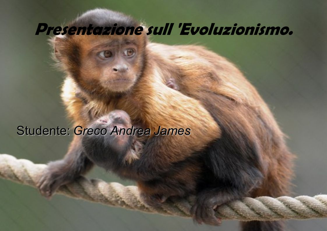 Presentazione sull Evoluzionismo.