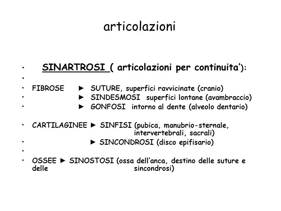 articolazioni SINARTROSI ( articolazioni per continuita'):