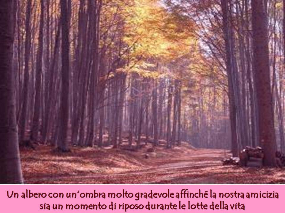Un albero con un'ombra molto gradevole affinché la nostra amicizia sia un momento di riposo durante le lotte della vita