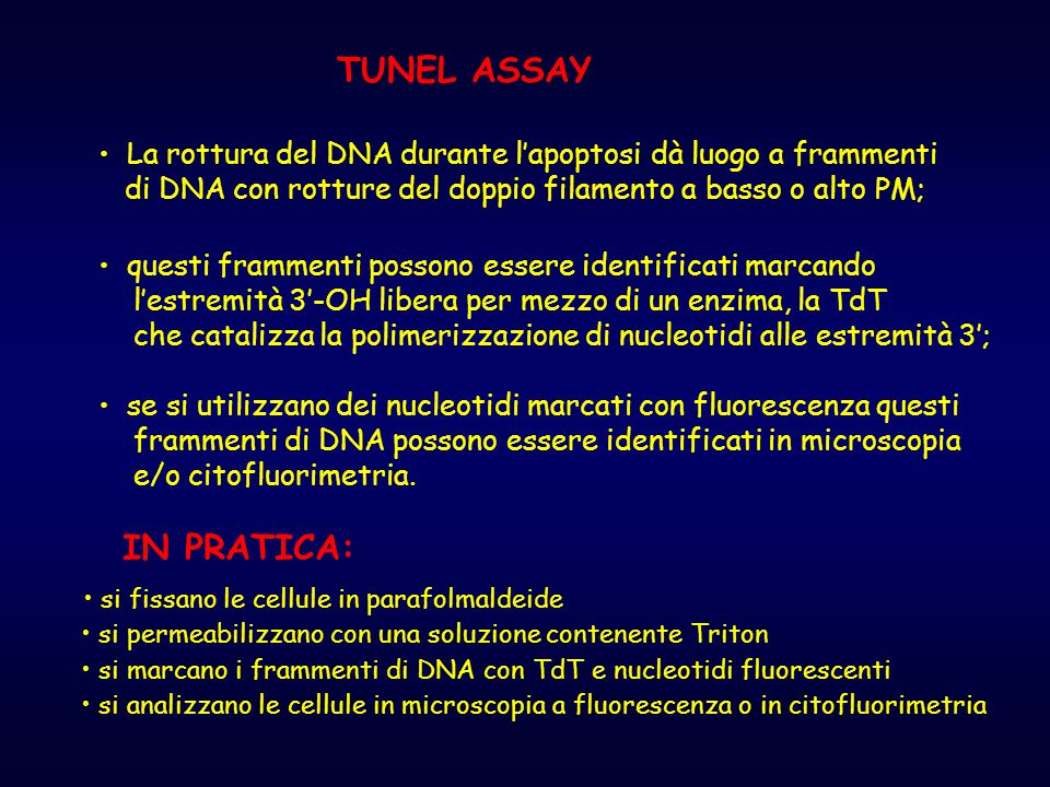 TUNEL ASSAY IN PRATICA: