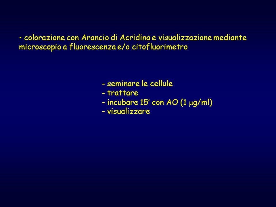 colorazione con Arancio di Acridina e visualizzazione mediante