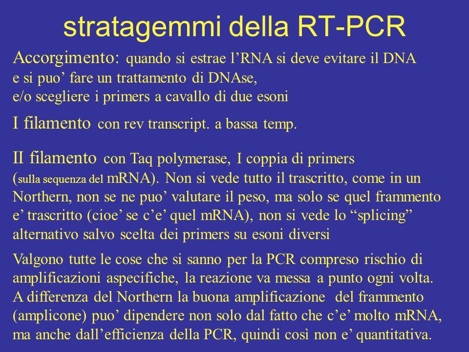 stratagemmi della RT-PCR