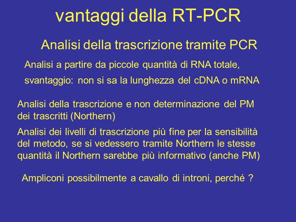 Analisi della trascrizione tramite PCR