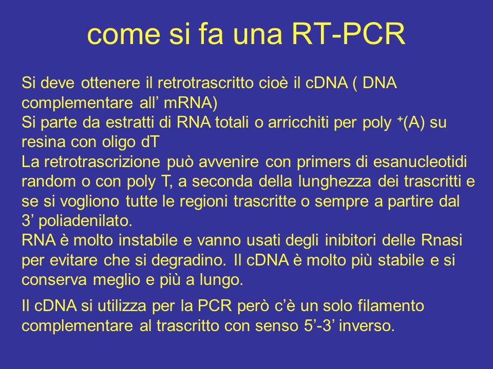 come si fa una RT-PCR Si deve ottenere il retrotrascritto cioè il cDNA ( DNA complementare all' mRNA)