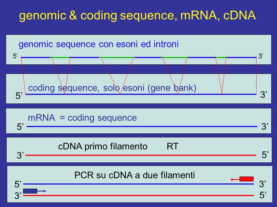 genomic & coding sequence, mRNA, cDNA