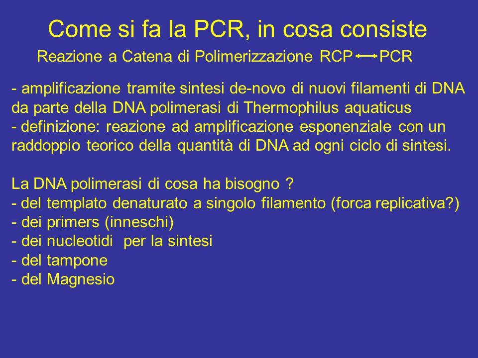 Come si fa la PCR, in cosa consiste