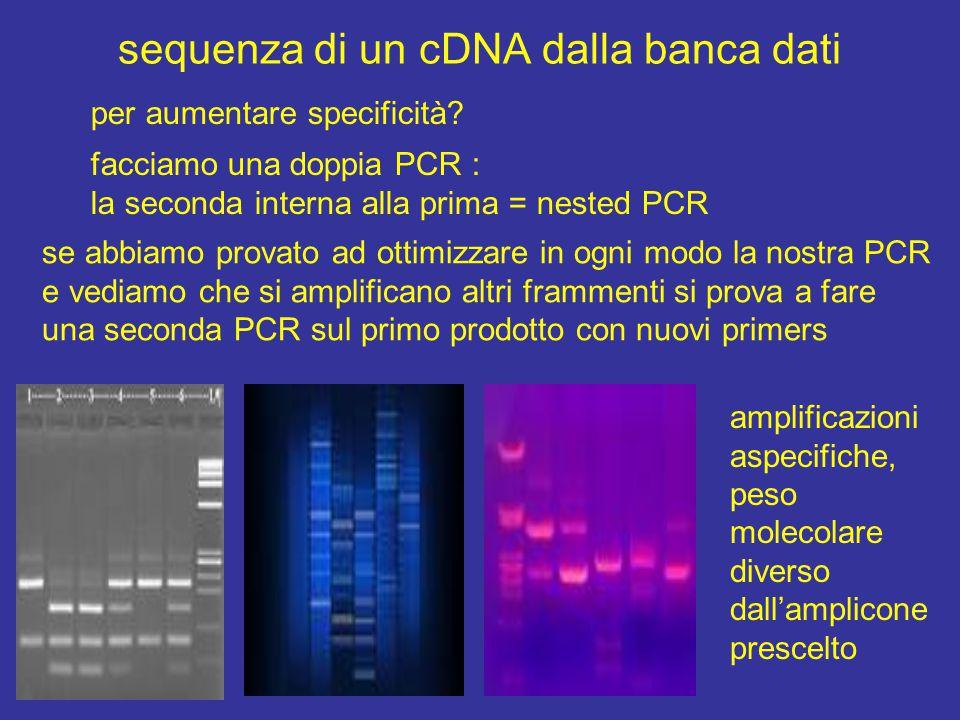 sequenza di un cDNA dalla banca dati