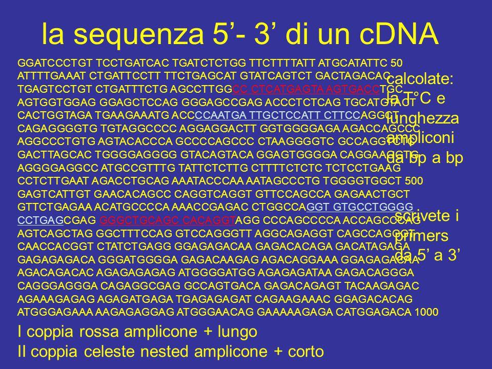la sequenza 5'- 3' di un cDNA