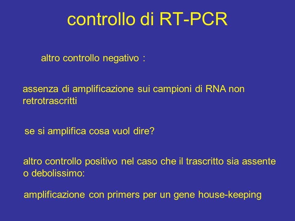 controllo di RT-PCR altro controllo negativo :