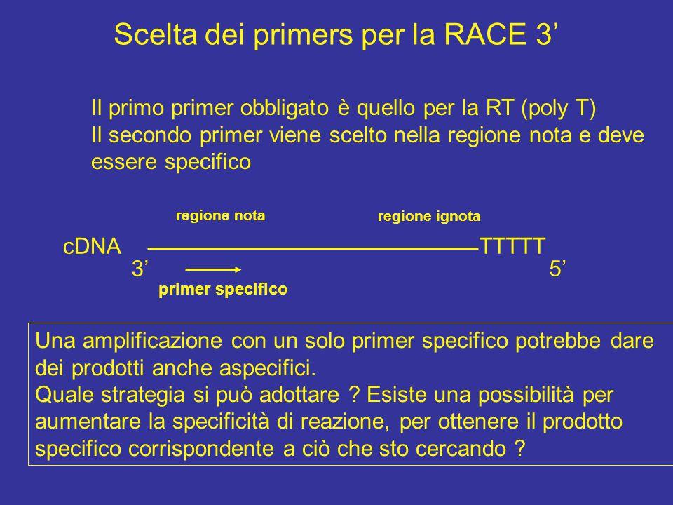 Scelta dei primers per la RACE 3'