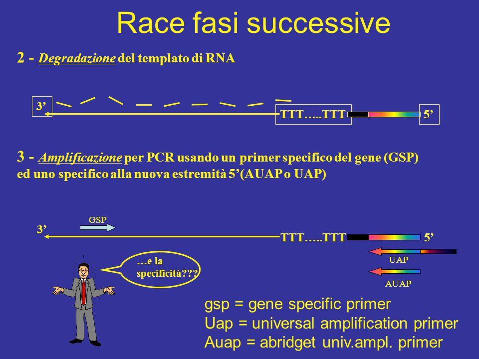 Race fasi successive 2 - Degradazione del templato di RNA