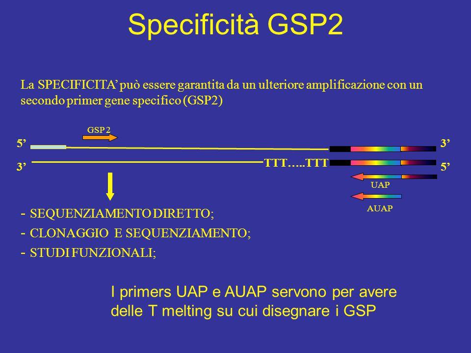 Specificità GSP2 - SEQUENZIAMENTO DIRETTO;