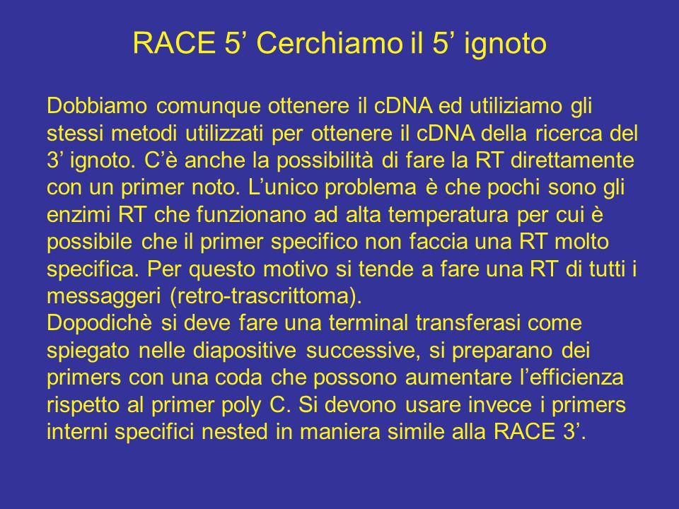 RACE 5' Cerchiamo il 5' ignoto