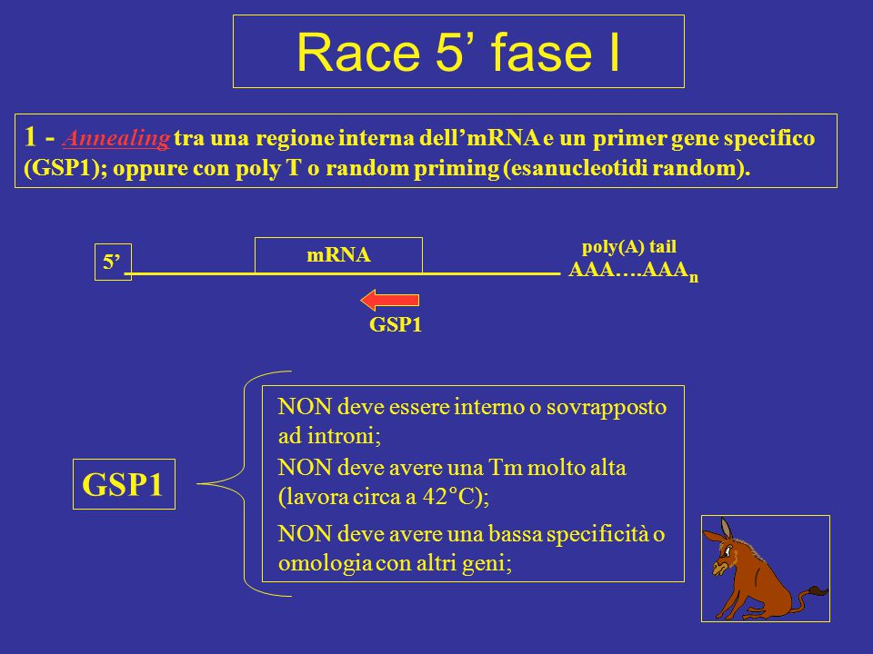 Race 5' fase I