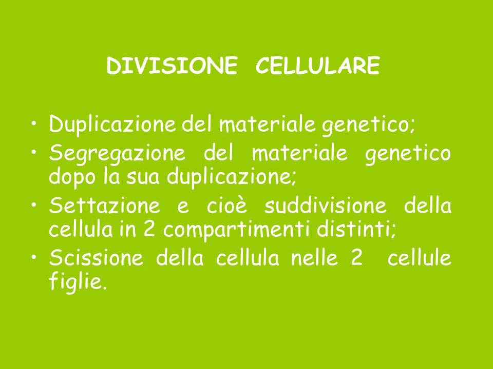 DIVISIONE CELLULARE Duplicazione del materiale genetico; Segregazione del materiale genetico dopo la sua duplicazione;