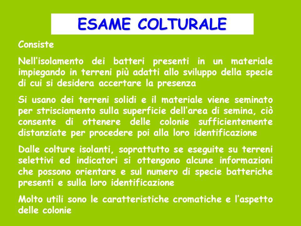 ESAME COLTURALE Consiste
