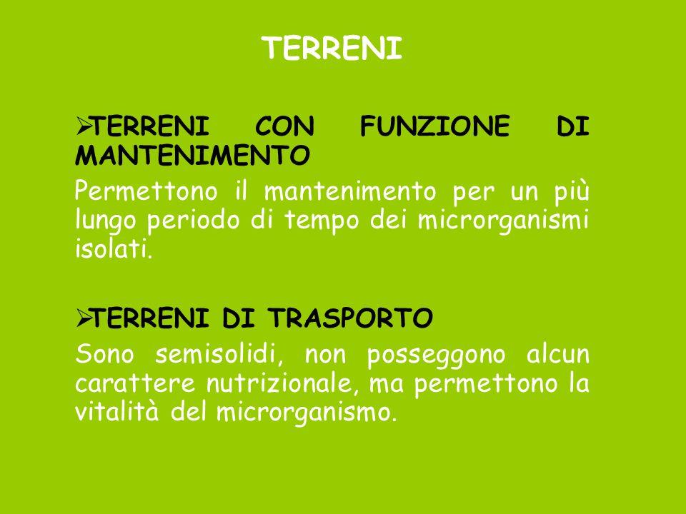 TERRENI TERRENI CON FUNZIONE DI MANTENIMENTO