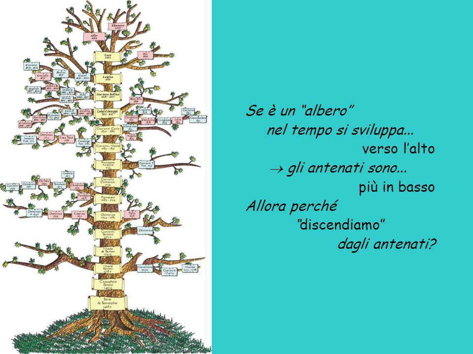 Se è un albero nel tempo si sviluppa... verso l'alto.  gli antenati sono... più in basso. Allora perché.