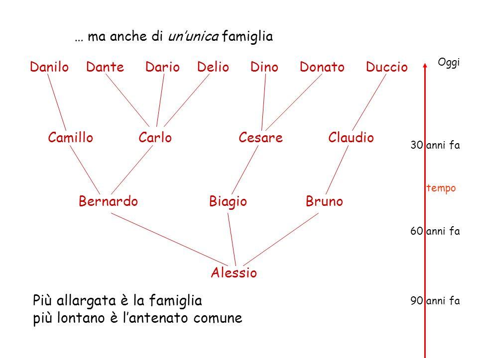 Più allargata è la famiglia più lontano è l'antenato comune