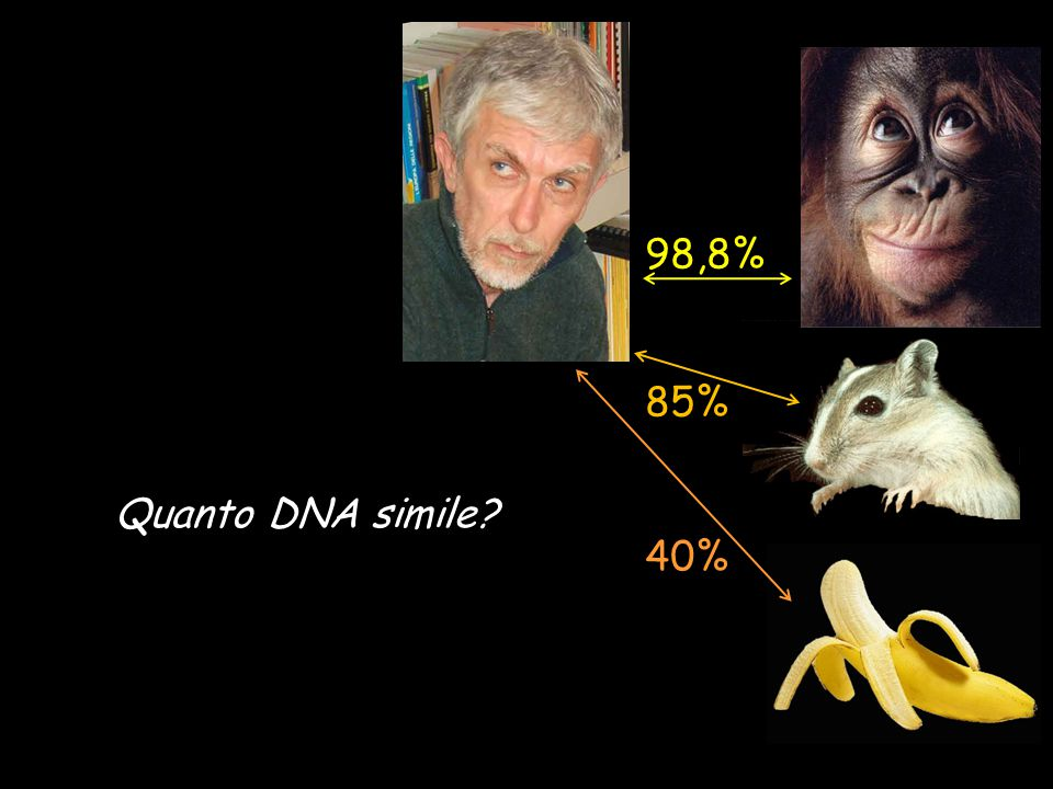 98,8% 85% 40% Quanto DNA simile