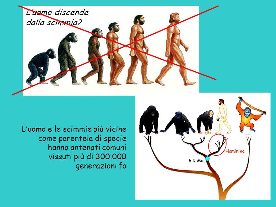 L'uomo discende dalla scimmia L'uomo e le scimmie più vicine