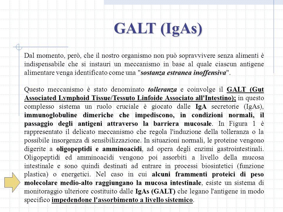 GALT (IgAs)
