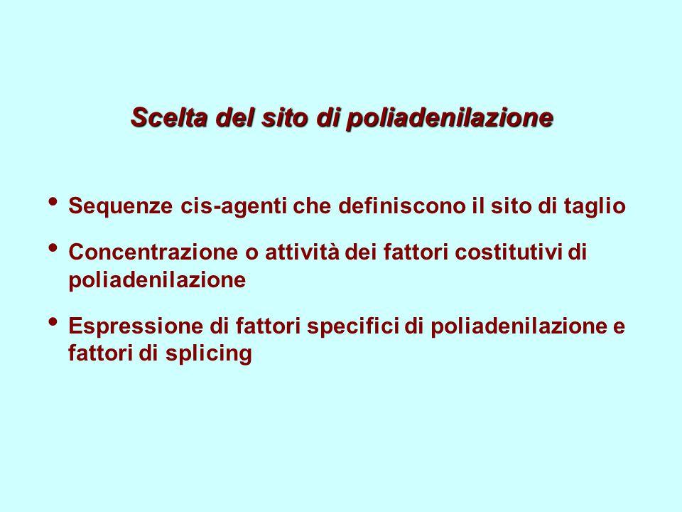 Scelta del sito di poliadenilazione