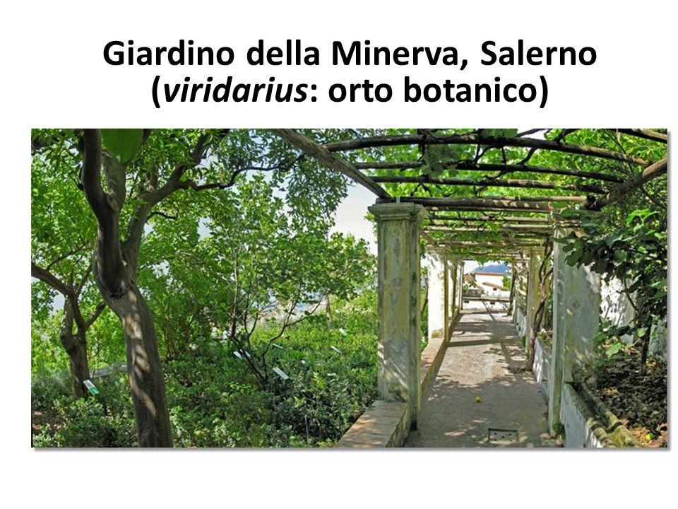 Giardino della Minerva, Salerno (viridarius: orto botanico)