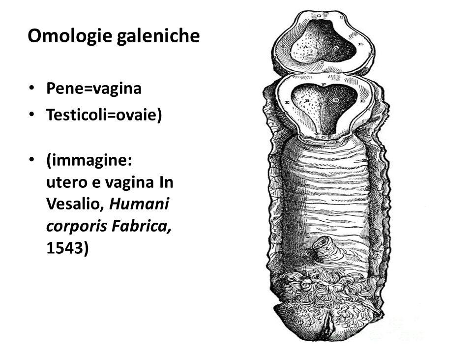 Omologie galeniche Pene=vagina Testicoli=ovaie)