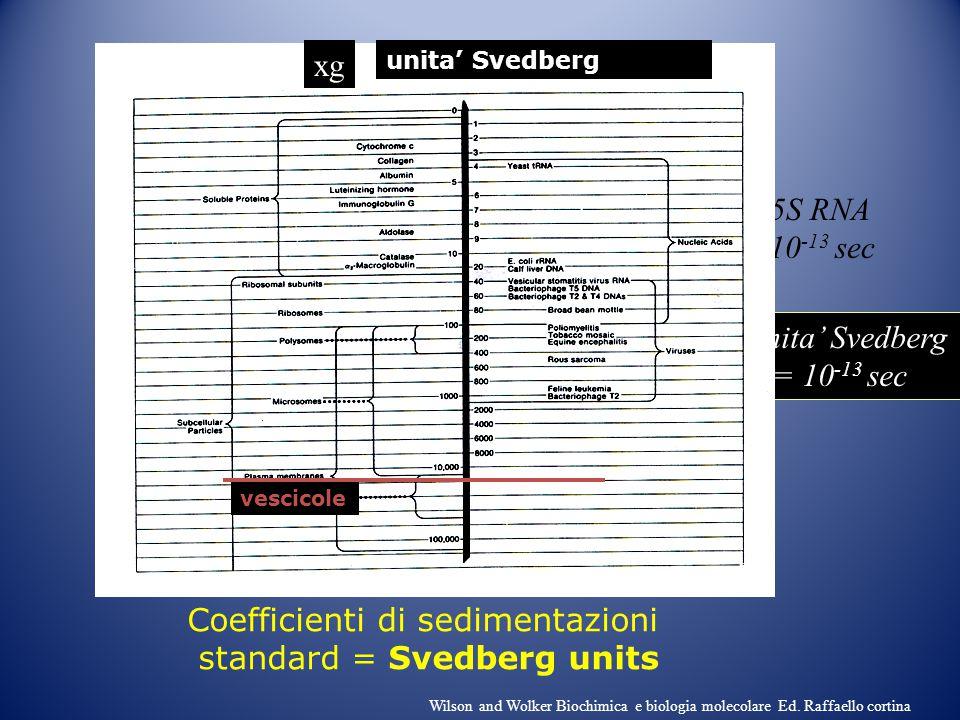 Coefficienti di sedimentazioni standard = Svedberg units