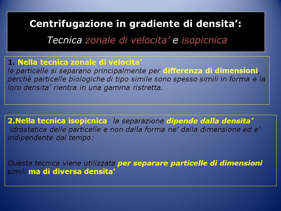 Centrifugazione in gradiente di densita':