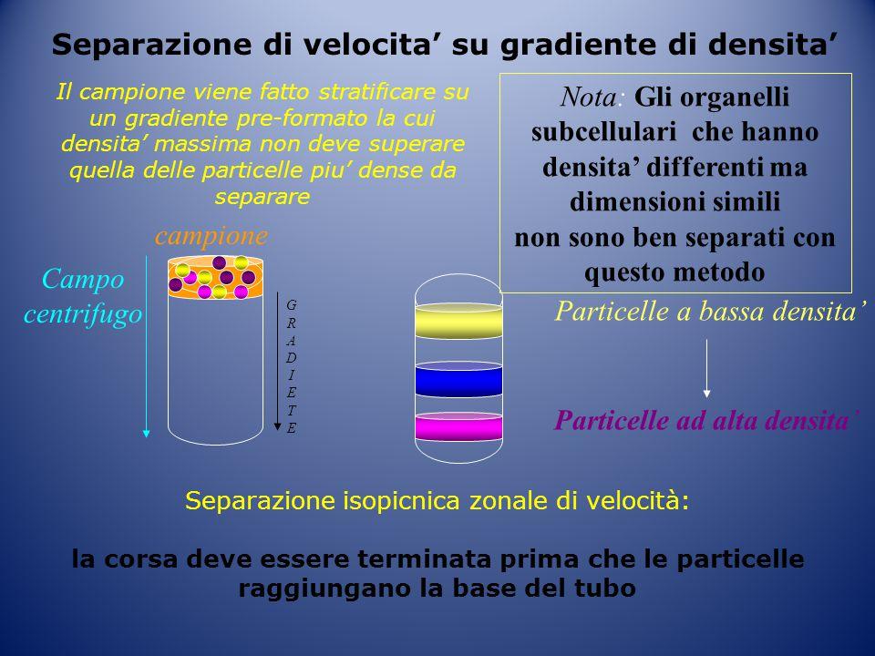 Separazione di velocita' su gradiente di densita'